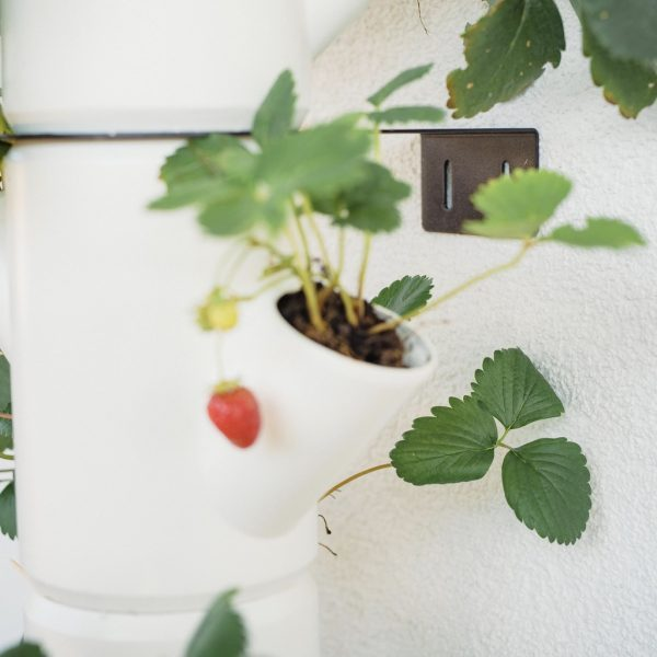SISSI STRAWBERRY wall mount