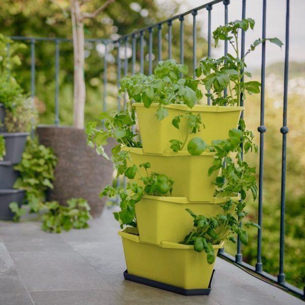 PAUL POTATO Starter grün mit Untersetzer