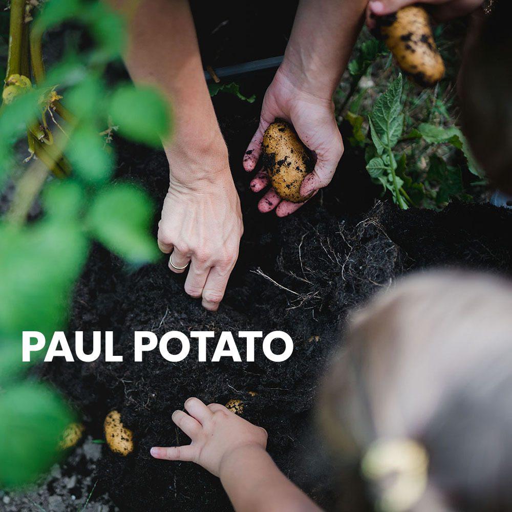 PAUL-POTATO-Anleitung