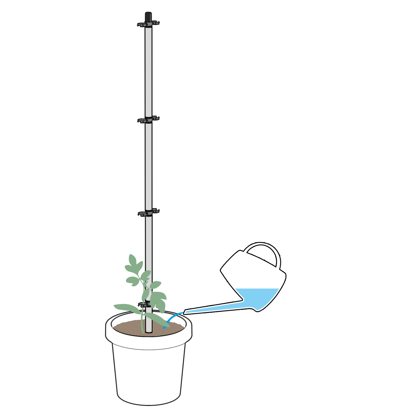 TOMATO-BUDDY-Growing3