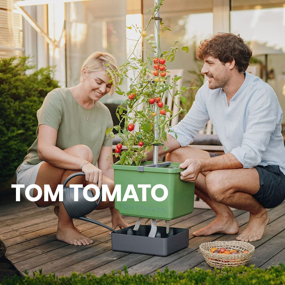TOM-TOMATO-Anleitung
