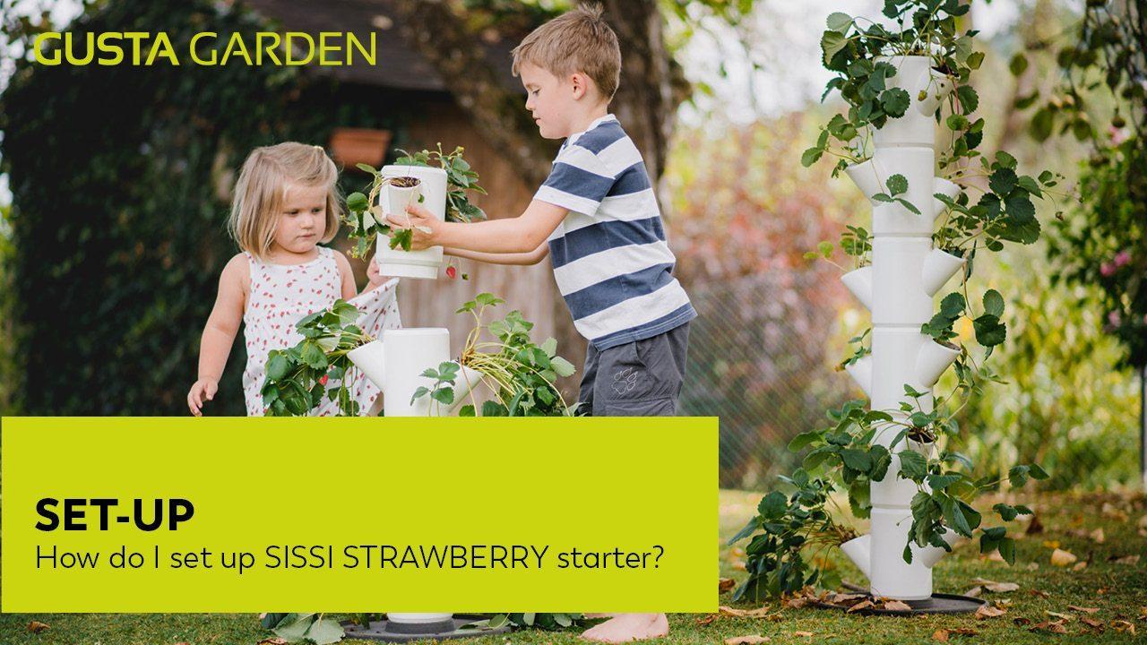 'SISSISTRAWBERRY_starter_set-up'