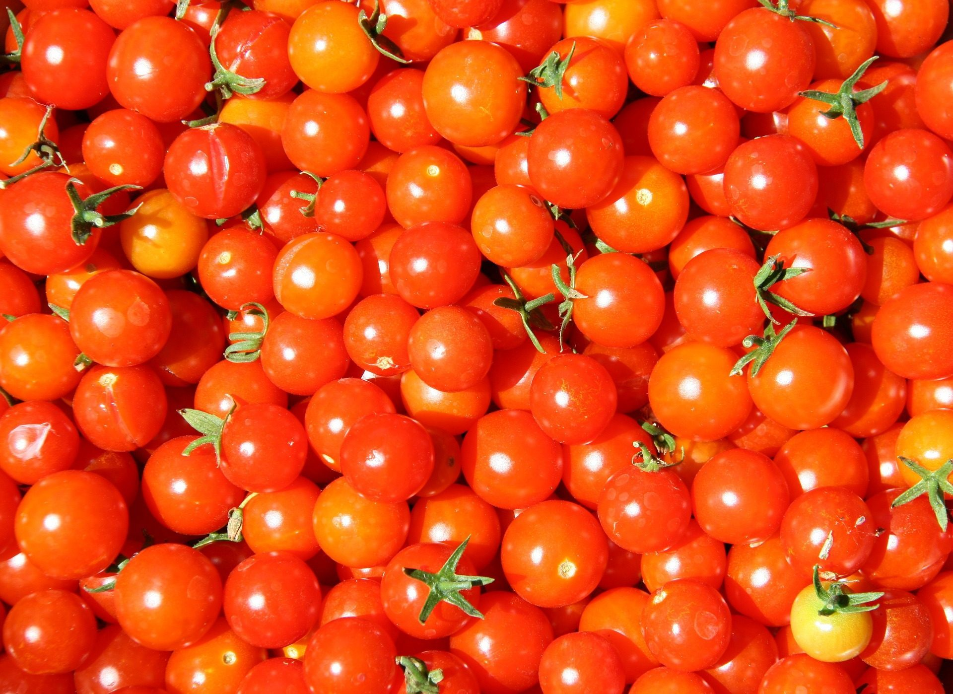 tomatoes-835385_1920