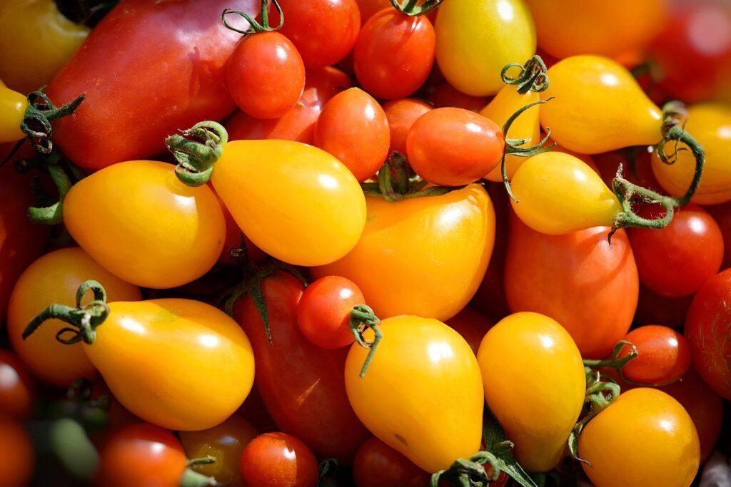 yellow-tomatoes-1671327