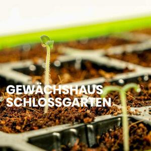 Gewächshaus-Schlossgarten-Anleitung